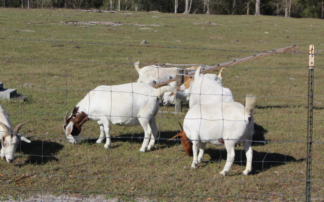Livestock Fence 101